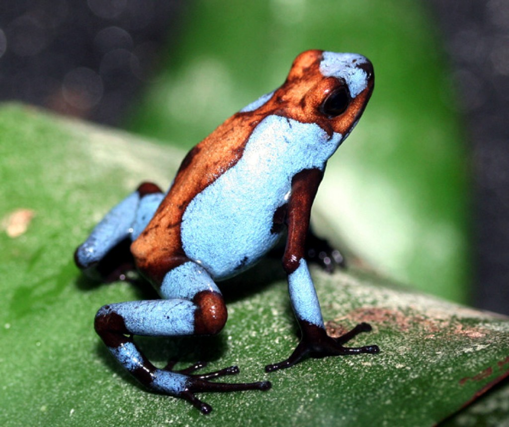 """The Spring Peeper: """"New"""" Frogs"""
