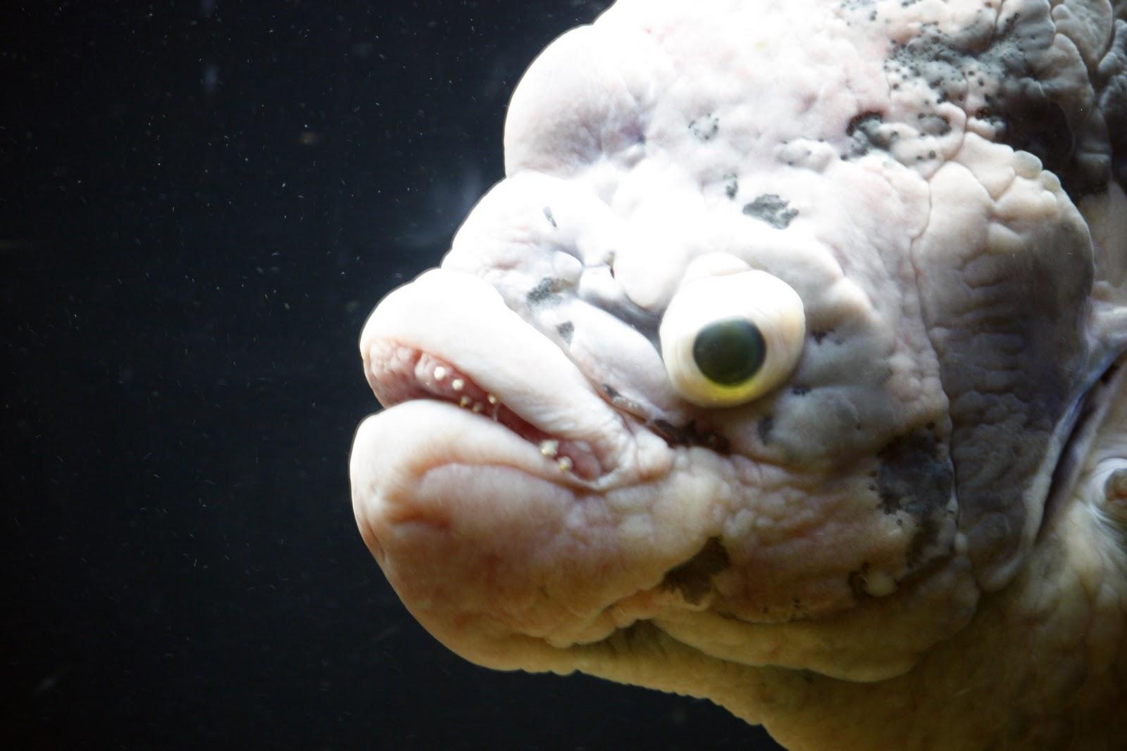 Fish: Ugly As Sin | Jr's World At Large