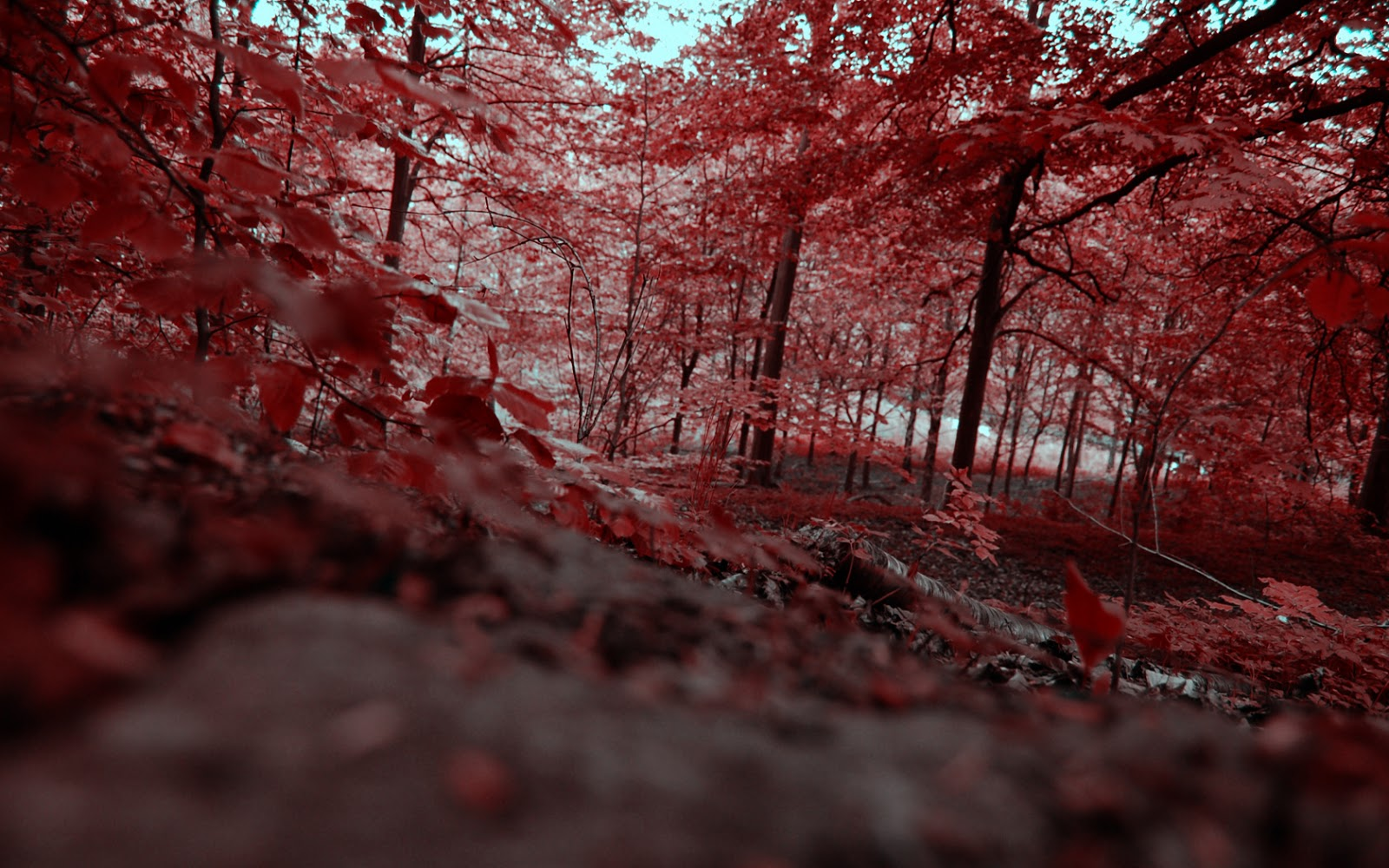 THE MOST AMAZING & WEIRDEST PLACES ON EARTH: THE RED FOREST