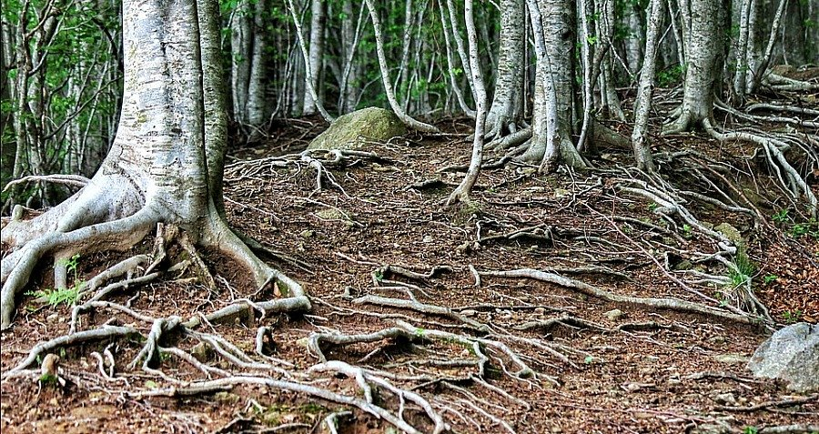 Talking Trees: How Trees Communicate And Care For Each Other
