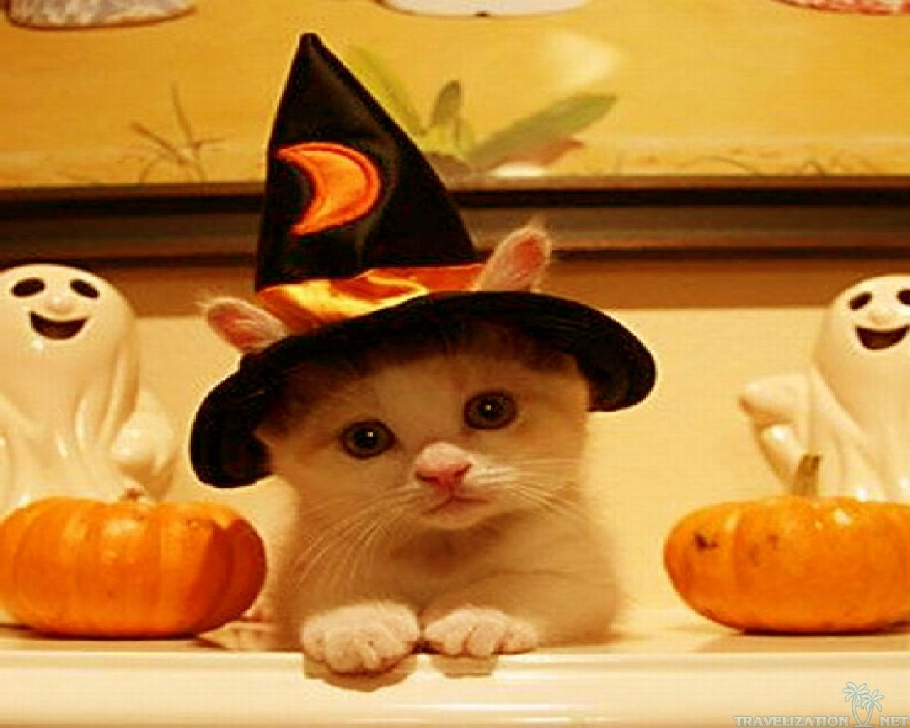 Cute Halloween Wallpaper Backgrounds - WallpaperSafari