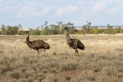 The North Australian savanna Grasslands - Home