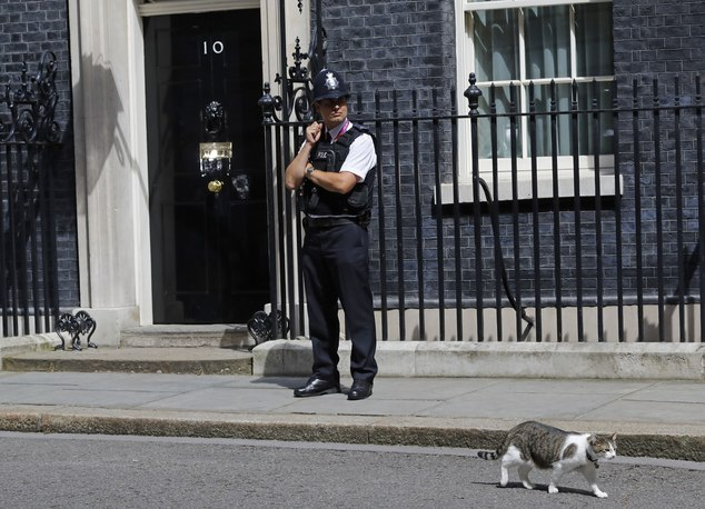 Mice watch out: Larry the cat to stay at 10 Downing Street ...