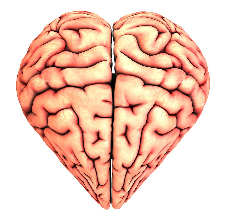 Heart-shaped Brain, Conceptual Artwork Photograph by Pasieka