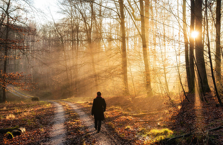 Walk In The Forest Warm Light Sun Is Shining Photograph by ...