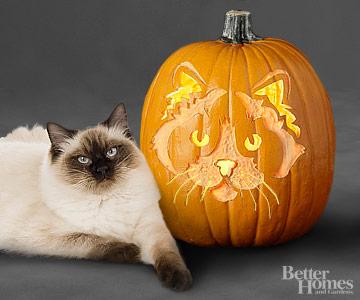 Ragdoll Cat Pumpkin Stencil
