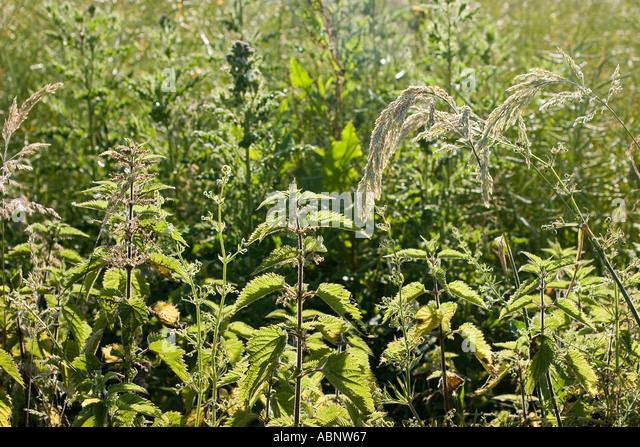 Tangleweed Stock Photos & Tangleweed Stock Images - Alamy