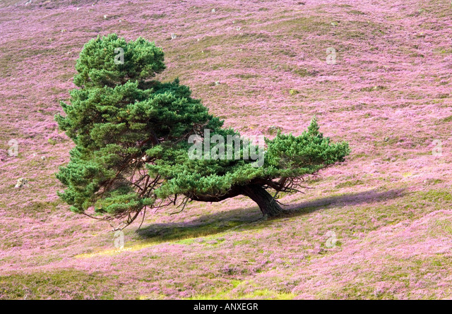 Prevailing Wind Stock Photos & Prevailing Wind Stock ...