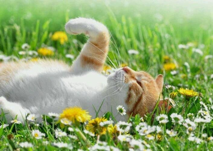 Spring has come. | Cats | Pinterest