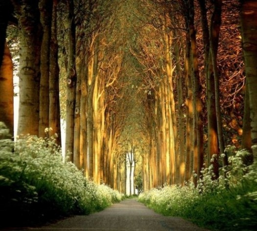 Cathedral Forest. | All Things Magical | Pinterest