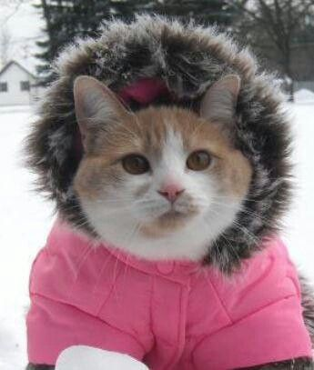 Snow suit kitten | Cats N Creatures | Pinterest