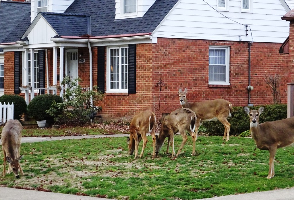 Deer grazing on your shrubs? Coyotes chasing your pet ...