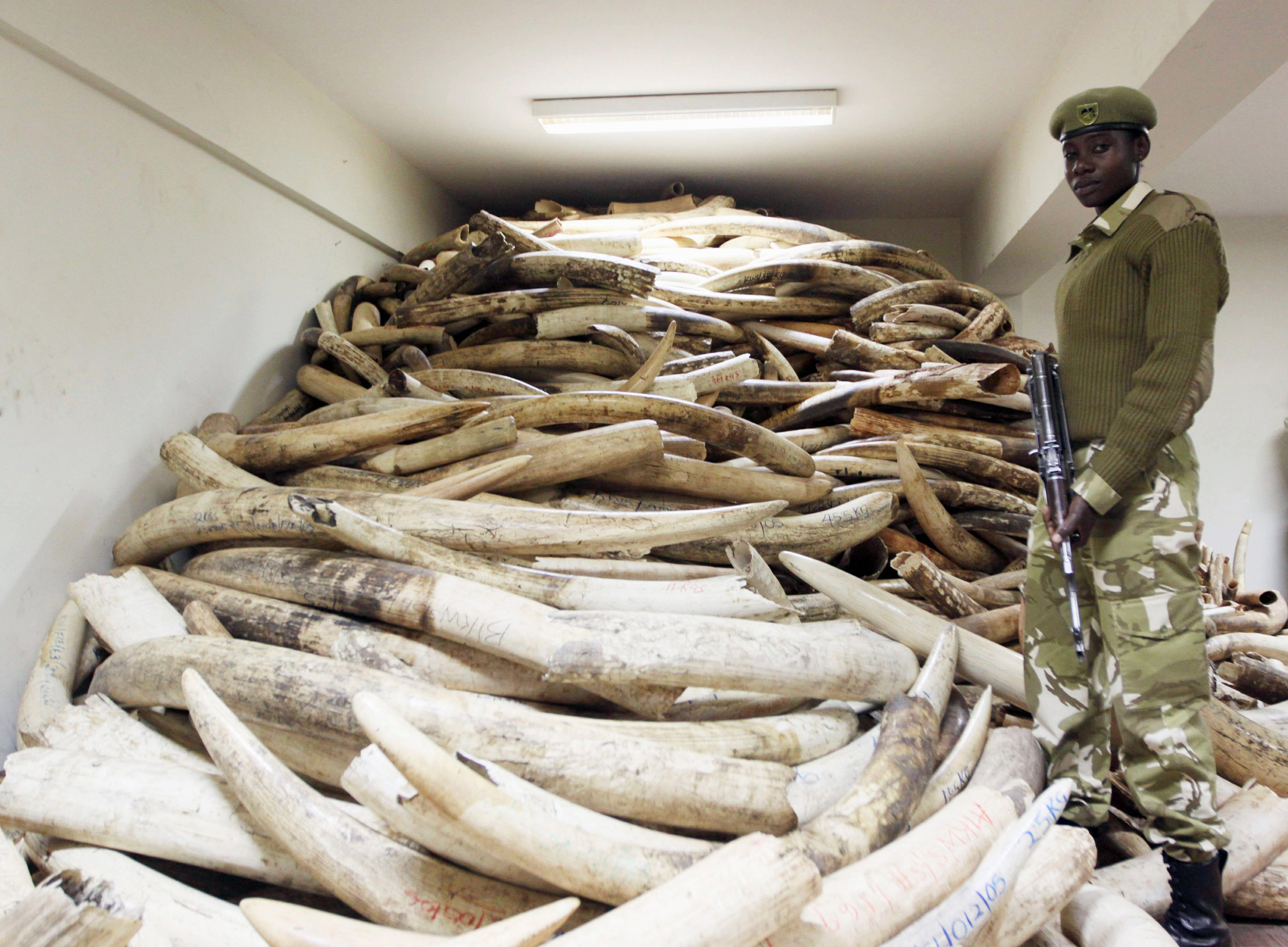 Terrorists slaughter African elephants, use ivory to ...