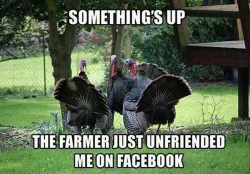 37 Funny Thanksgiving Pictures That Are So Funny You Can't ...