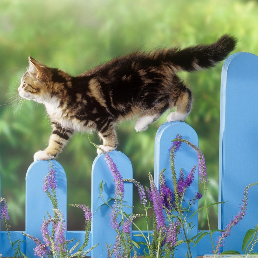 Kitten Walking On A Fence 4K HD Desktop Wallpaper for 4K ...