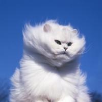 猫画像盛りだくさんのねこトピ!! - Part 22