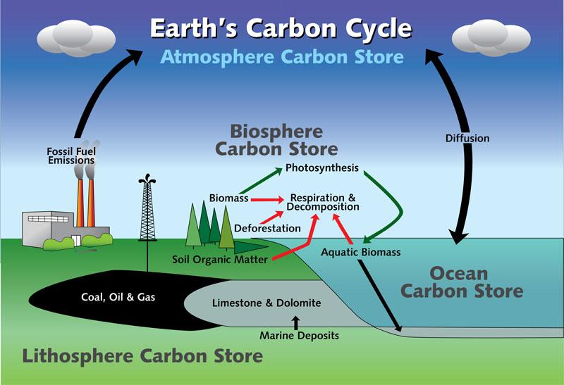 E) Natural Biogeochemical Cycles - Joseph APES Review