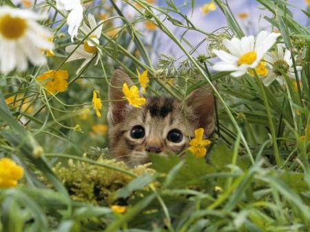 Spring Fuzziness – FuzzFeed