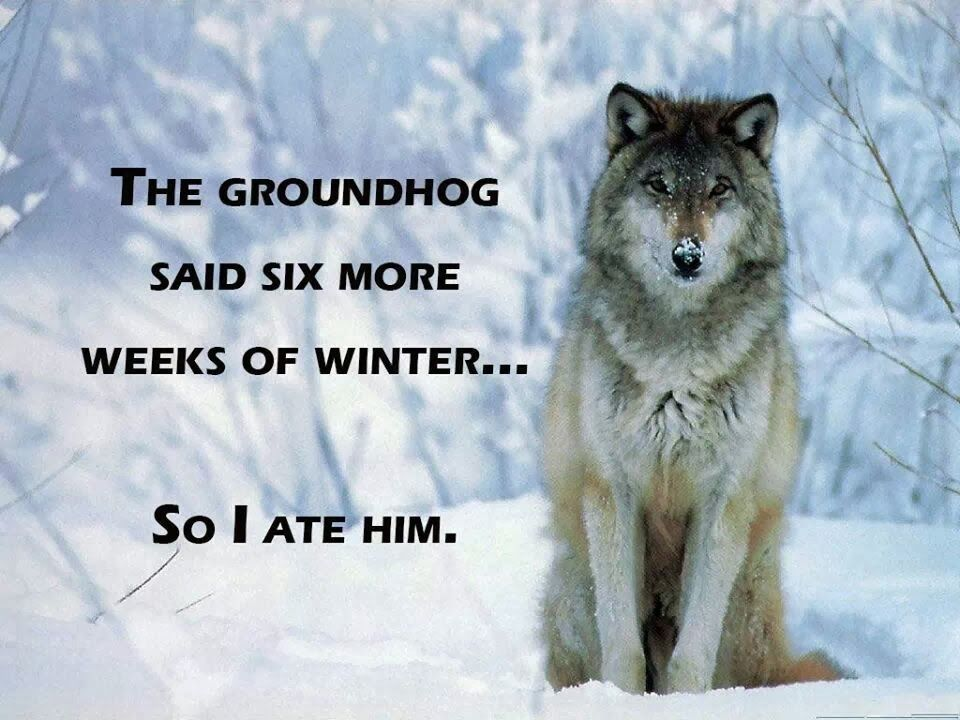 The Groundhog Said 6 More Weeks Of Winter Pictures, Photos ...