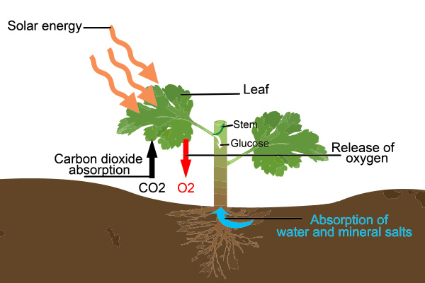 The REAL SCIENCE behind carbon dioxide: Plants use CO2 to ...