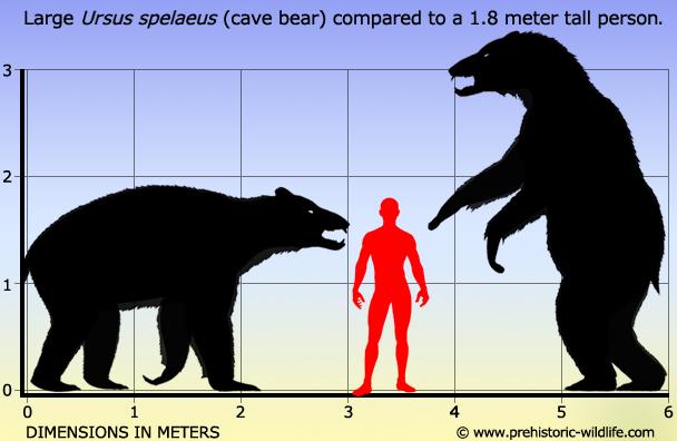 Kislev bear base ?u=http%3A%2F%2Fwww.prehistoric-wildlife.com%2Fimages%2Fspecies%2Fu%2Fursus-spelaeus-cave-bear-size