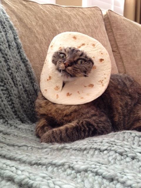 breading-the-cat.jpg&f=1