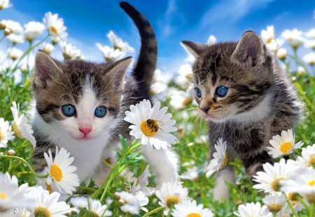 Kittens in the garden - Cats & Animals Background ...