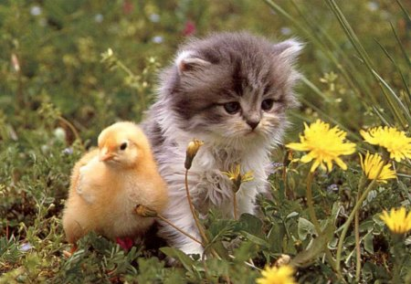 Cute babies *** - Cats & Animals Background Wallpapers on ...
