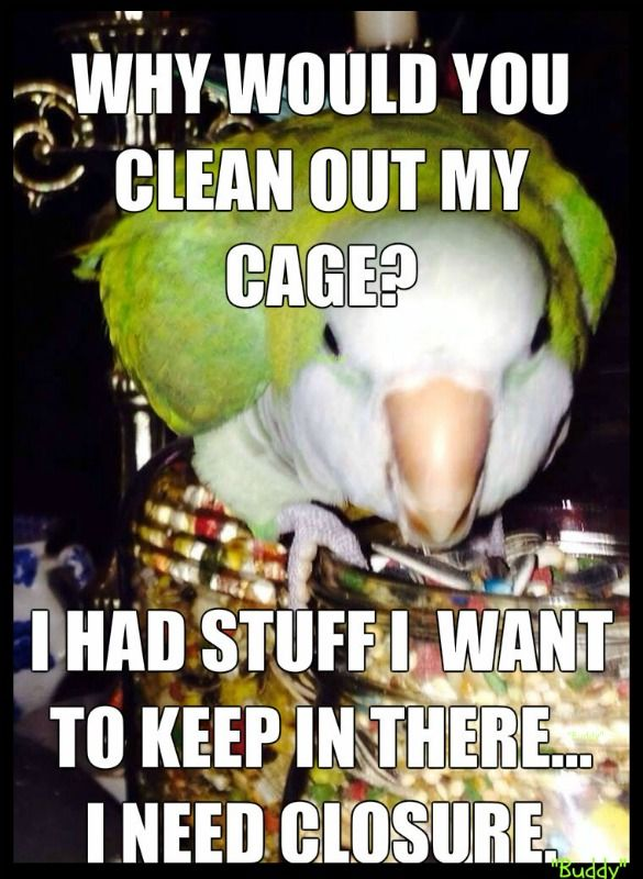 189 best Bird Humor & Funny Birds images on Pinterest ...