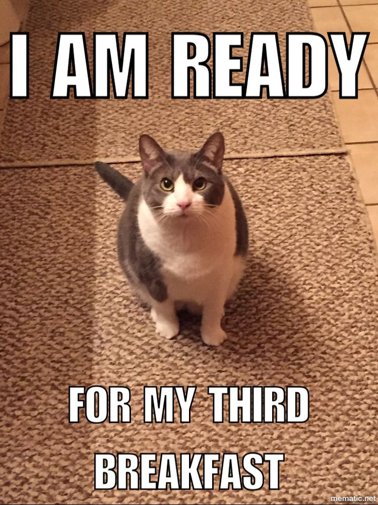 Hungry cat, feed me meow ~ Melody the cat   Cats   Pinterest   Cat feed, Cat and Animal