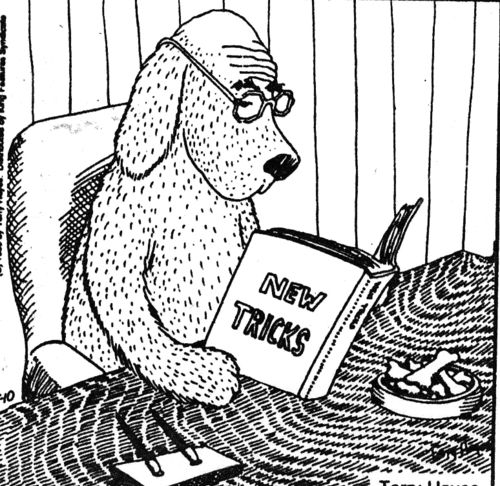 15 best Teaching old dogs new tricks images on Pinterest ...