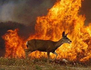 ~~ image reflects California wildlife affected by fires ...