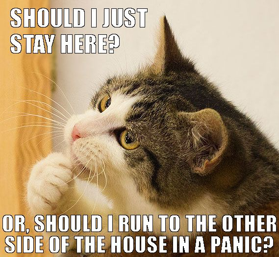 it is what cats do | Cats | Pinterest | Cat, Animal and ...