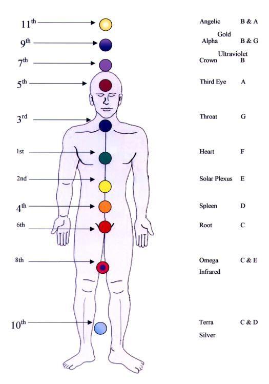 12 Chakra System | Bodhi | Chakra, Chakra system ...
