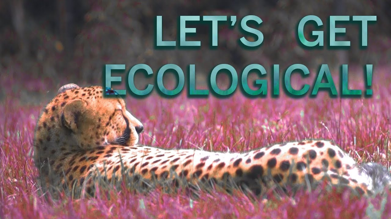Let's Get Ecological! - YouTube