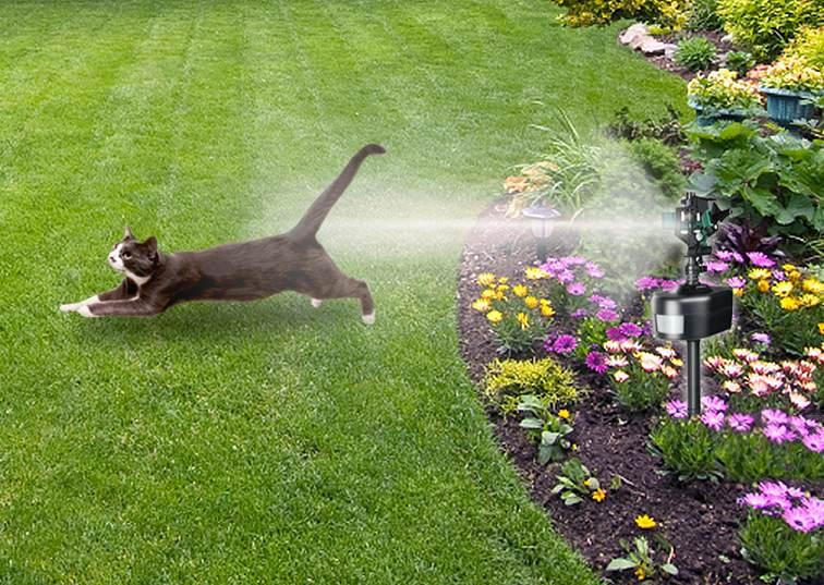 Amazon.com : Havahart 5265 Spray Away Motion Detector ...