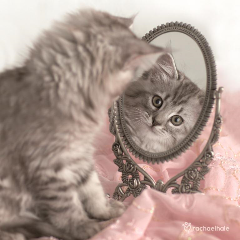 Kitten Looking In Mirror Cute Greeting Card | Cards | Love ...