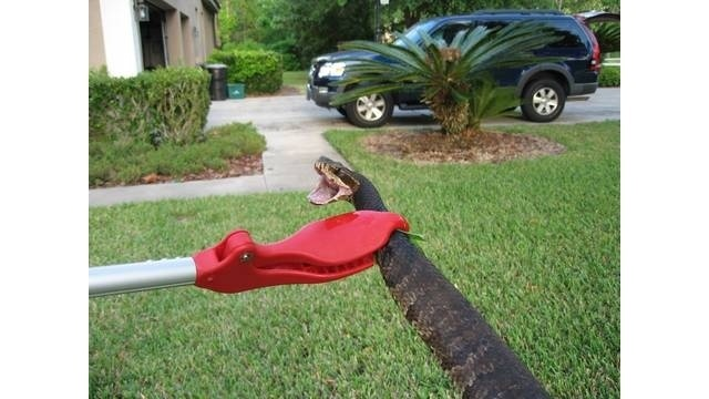 4-foot water moccasin captured in Lake Mary backyard