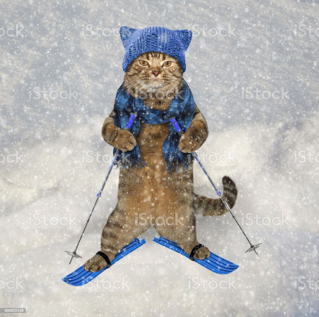 Cat In Knetted Hat On Skis Stock Photo & More Pictures of ...