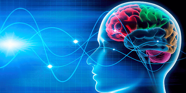What is Neuroplasticity? A Psychologist Explains [+ 14 ...