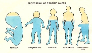 What percent of water is present in our body? - Quora