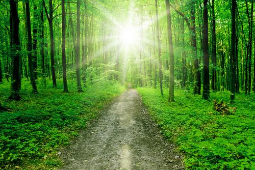 Walking a Spiritual Path – Ruthann M. Wilson