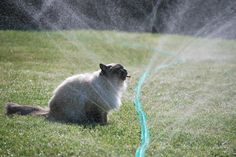 1000+ images about Silly Sprinkler Pets on Pinterest ...