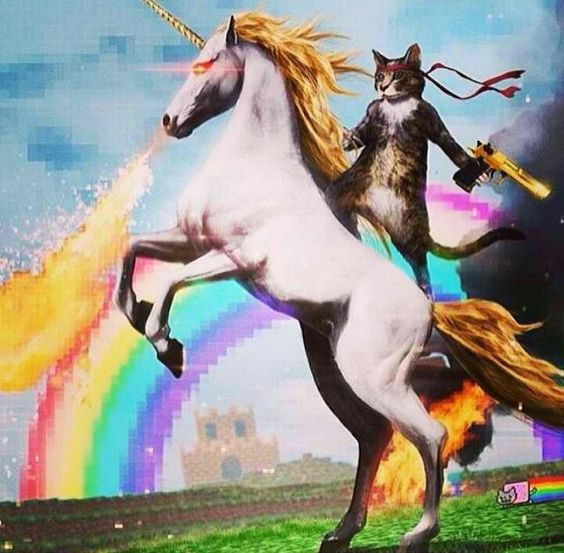 Badass ninja cat riding a unicorn...Rainbow! | .:•:i ...
