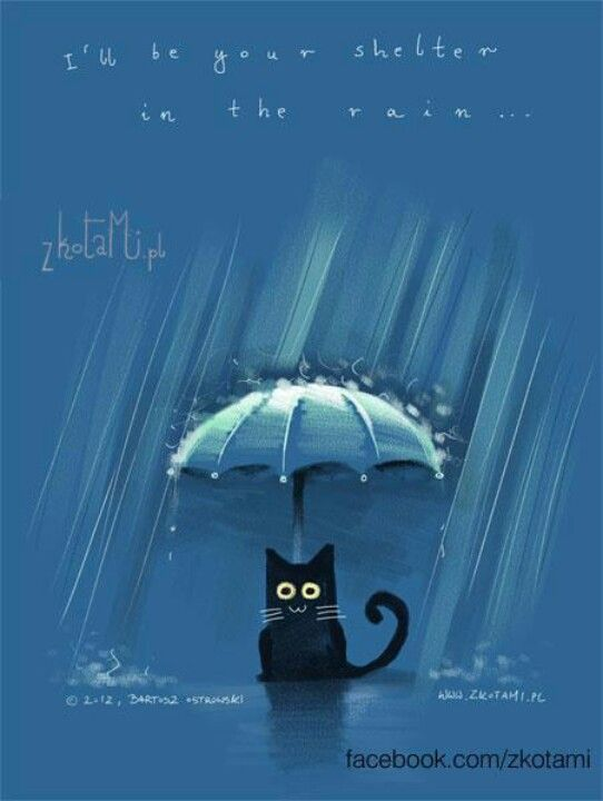 78+ images about Rain Cat on Pinterest | Limited edition ...