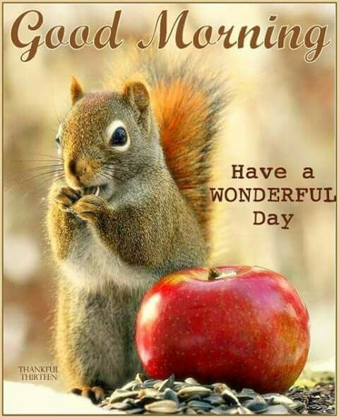 295 best Good Morning - good day wishes images on Pinterest