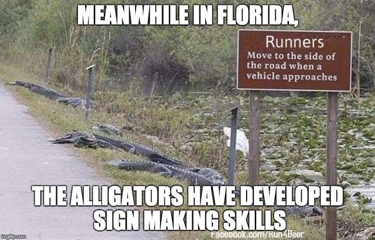 MEANWHILE IN FLORIDA, THE ALLIGATORS HAVE DEVELOPED SIGN ...