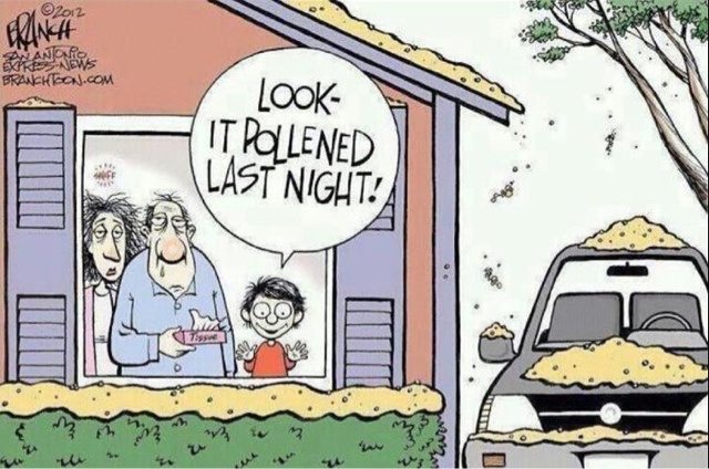 Funny pollen comic - my allergies are driving me crazy ...