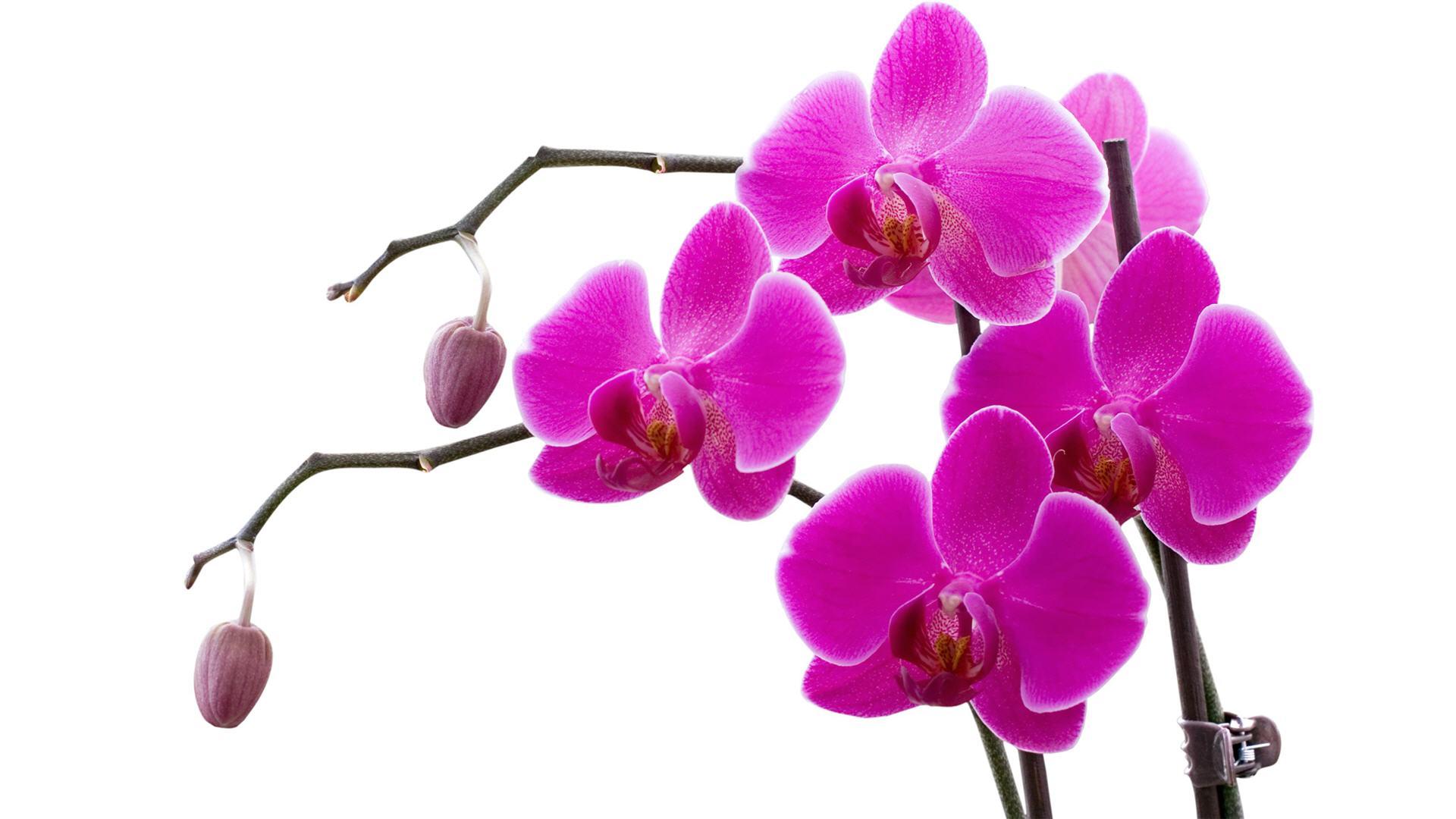 Photo Gallery   San Fernando Valley Orchid Society