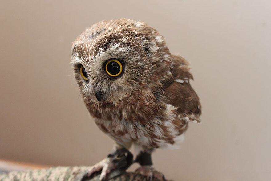 25+ Majestic Owls Caught On Camera | Bored Panda